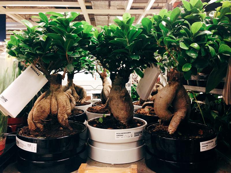 ikea растения
