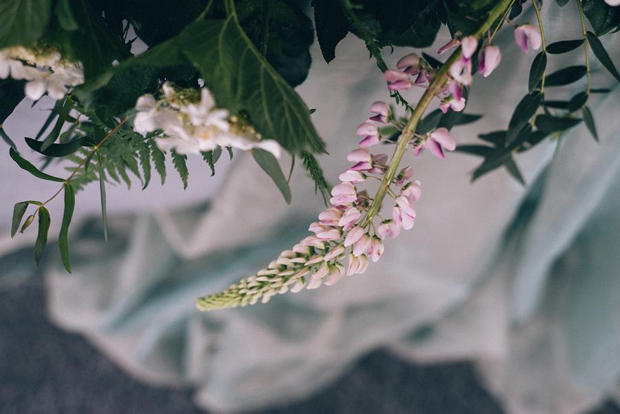 люпины розовые