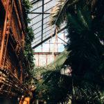 тропические растения пермь