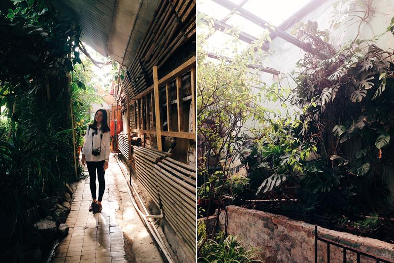 ботанический сад пгниу