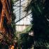 Ботанический сад ПГУ/ПНГИУ